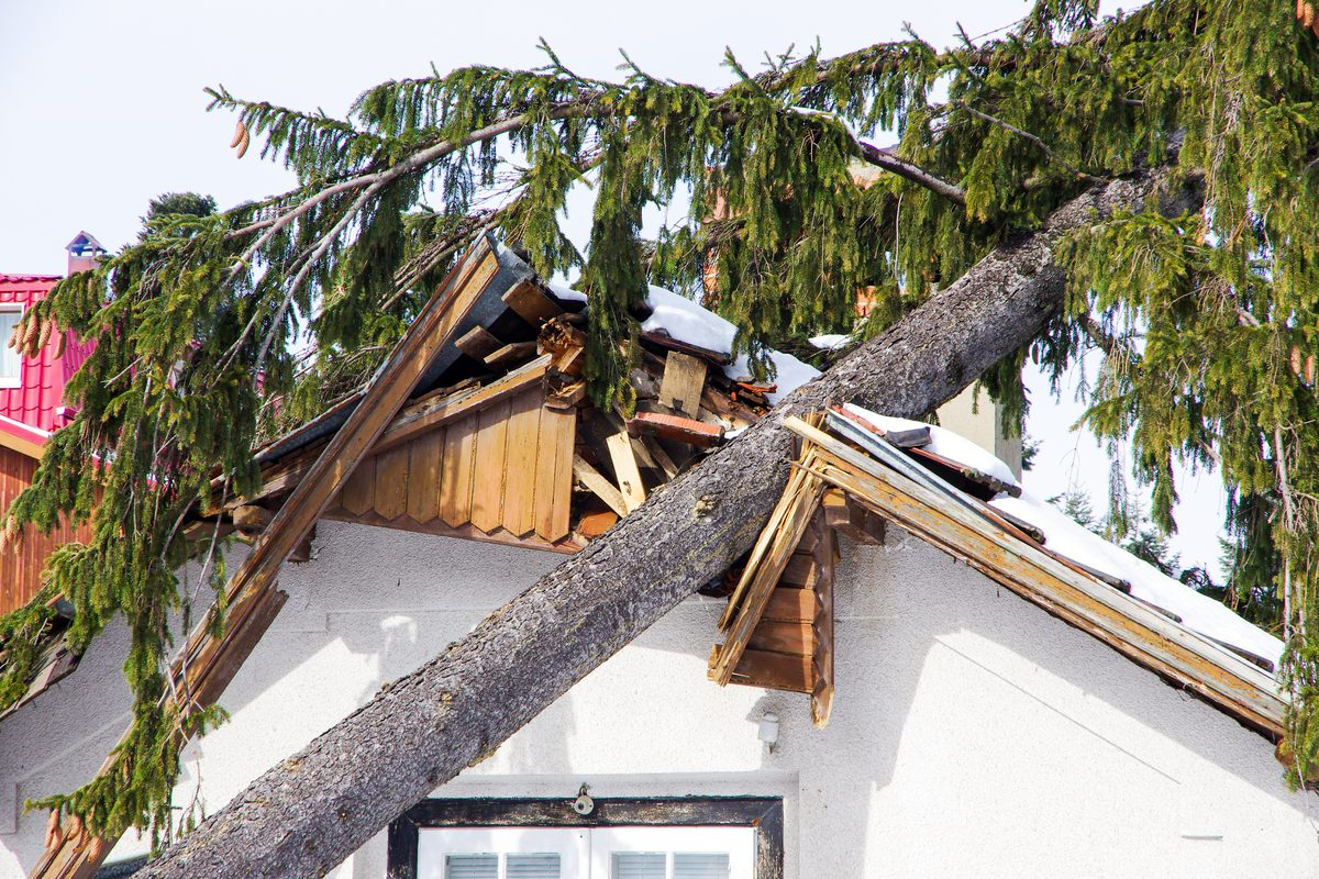 Trees and Roof Damage