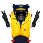 Frenchie in life vest