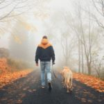 Rural road in mysterious fog. Man with dog on the trip in autumn nature.