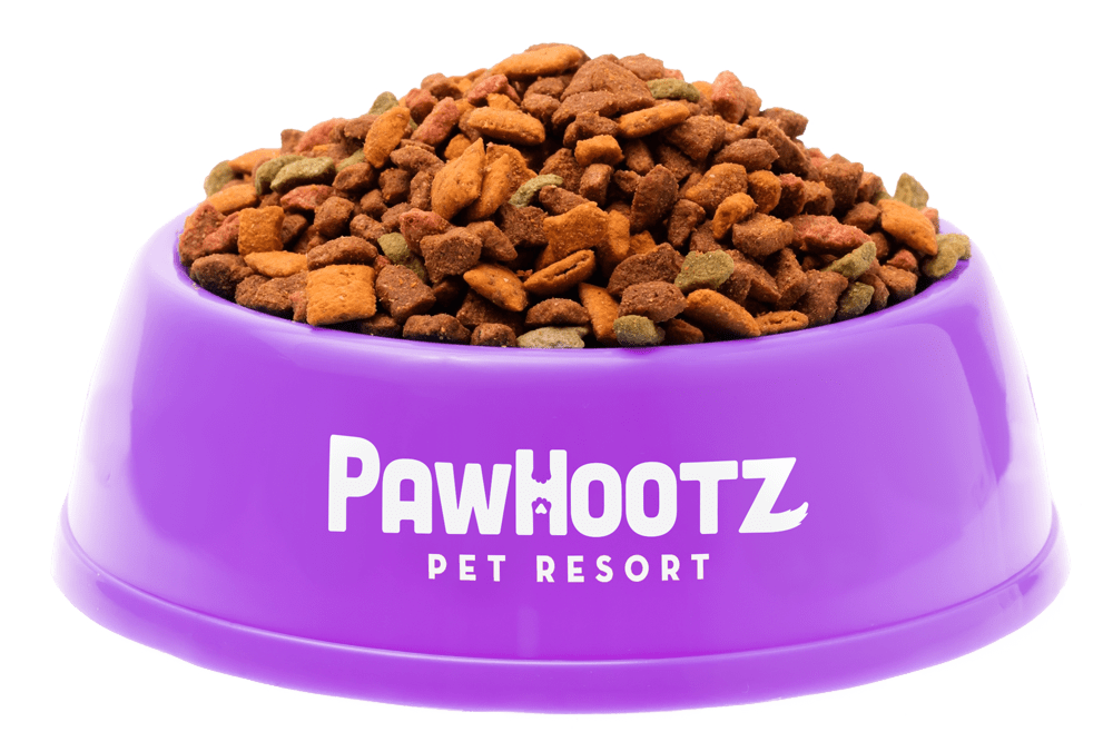 Pawhootz Purple food bowl