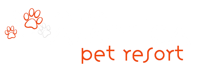 Animal America pet resort logo