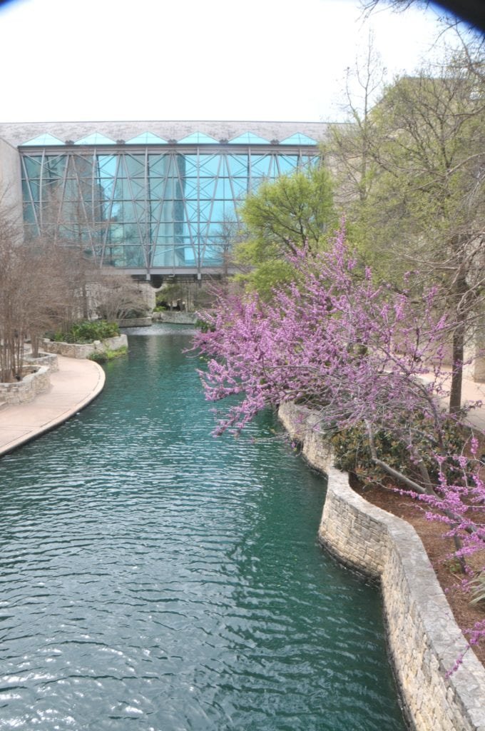 The San Antonio River dyed green